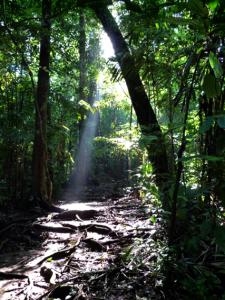 VPC-fot selva