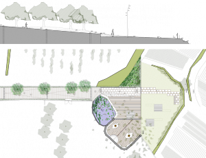 BSLL-planta i sec