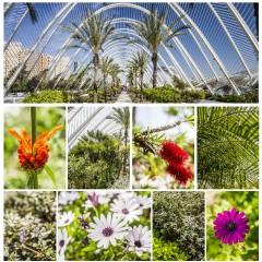 Gestión de los jardines de la Ciudad de las Artes y de Las Ciencias